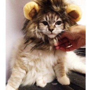 Pet Costume Lion Mane Wig