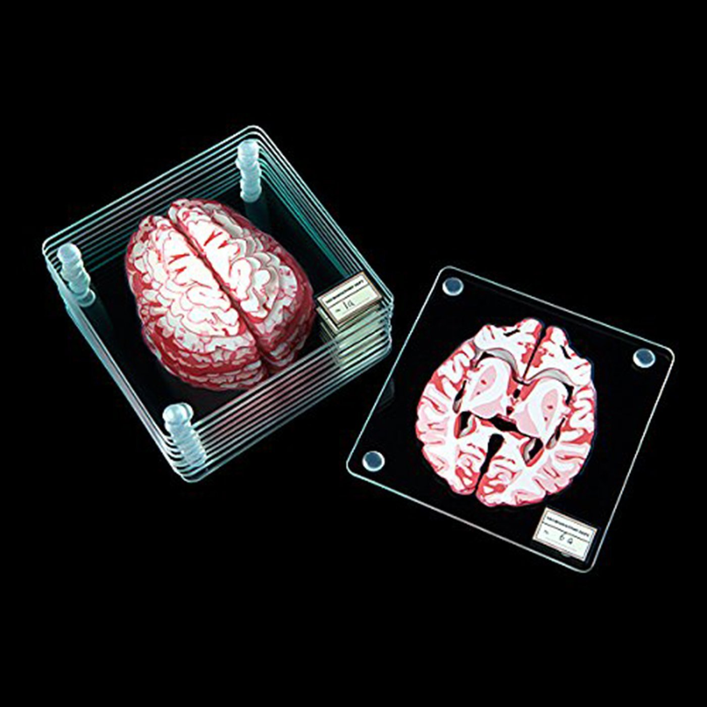 Set of 10 Brain Specimen Coasters