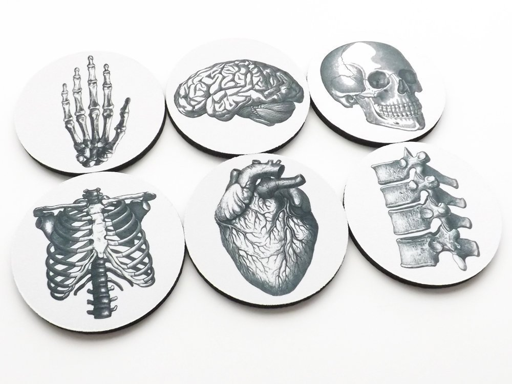 Set of 6 Anatomy Coasters